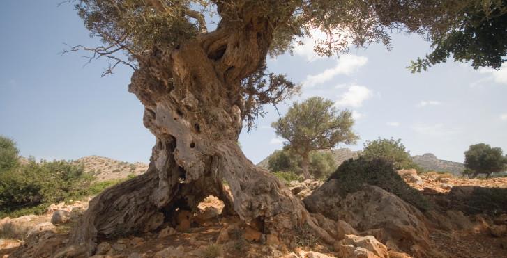 Bild 27326723 - Fly & Drive Kreta