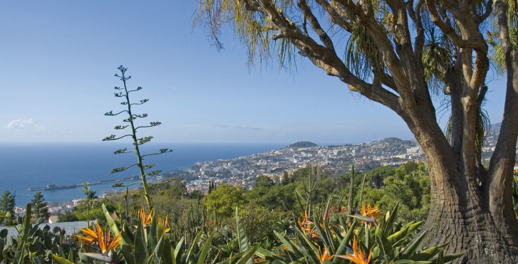 Bild 27326339 - Fly & Drive Madeira