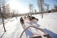 Husky Schlittenfahrt in Finnland