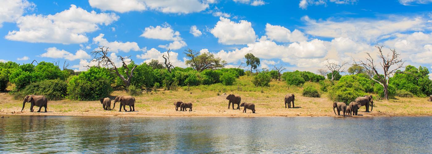 Éléphants dans le parc national de Chobe