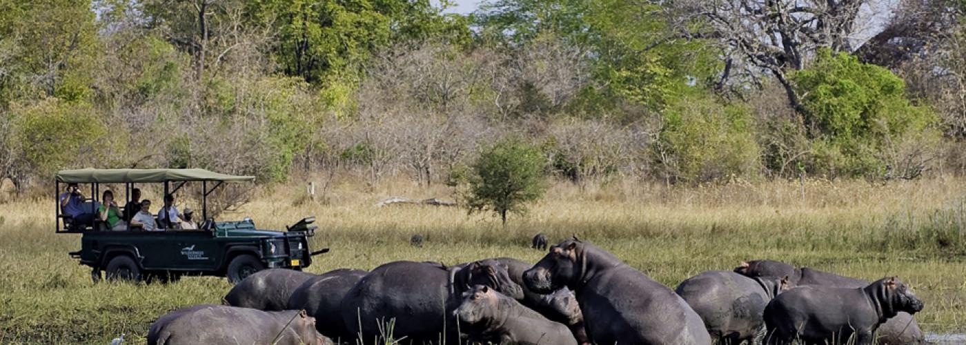 Nilpferde in Malawi