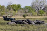 Hippopotames au Malawi