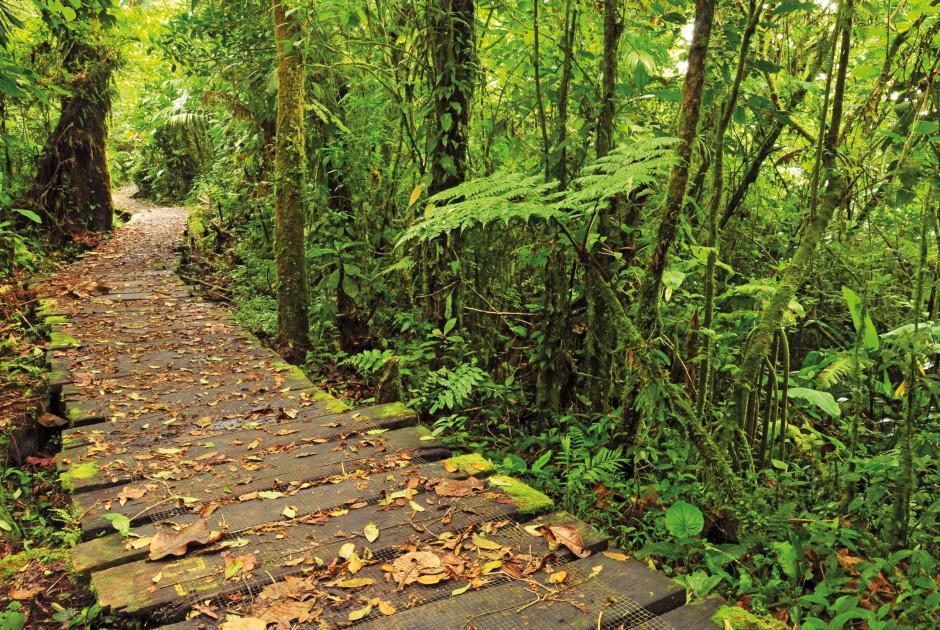 Monteverde-Reservat