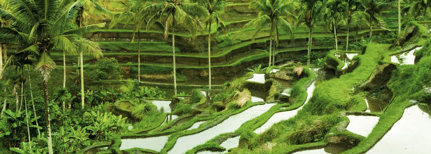 Reisterassen in Bali