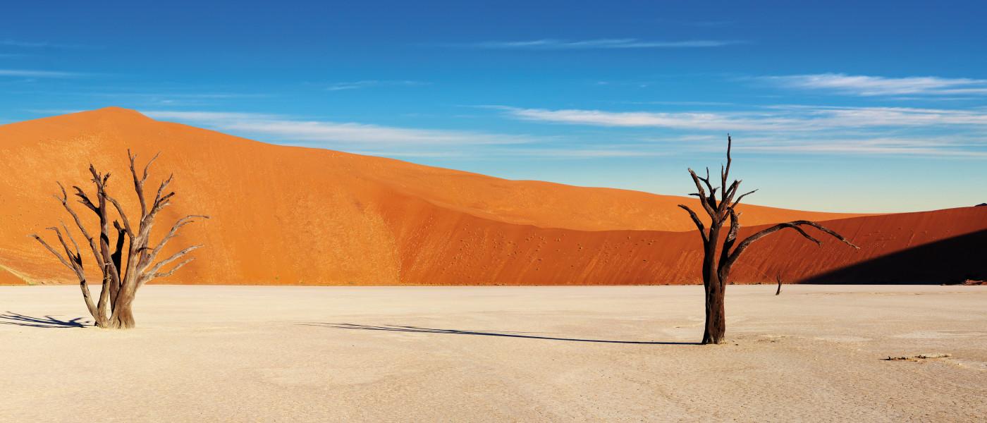 Wildlife & Desert