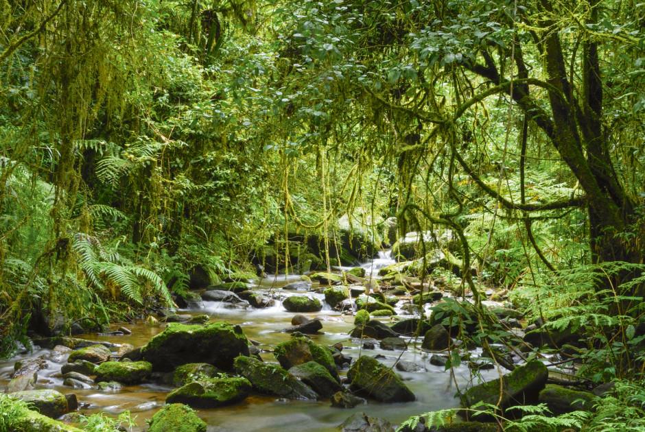 Fluss im Ranomafana Nationalpark - Madagaskar