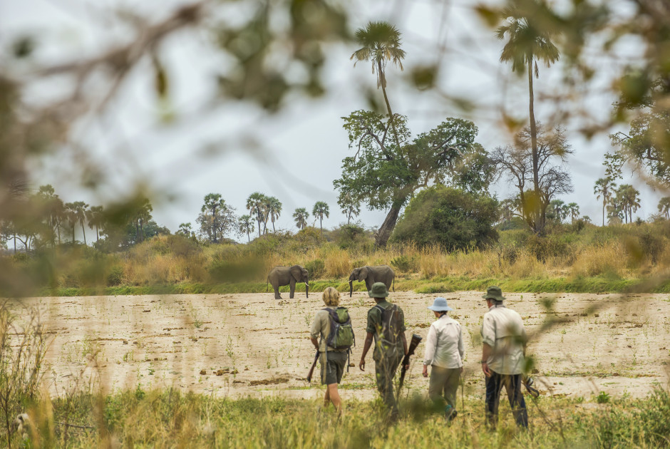 Walking Safari im Ruaha