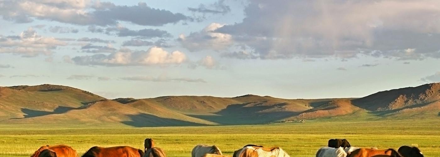 Pferdeherde in der Mongolischen Steppe