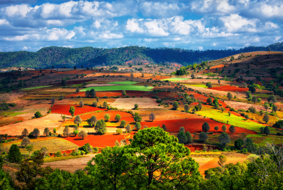Banyanbäume, Shan-Staat