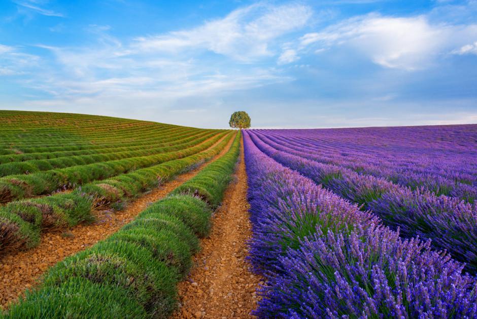 Lavendelfelder in der Provence Südfrankreichs
