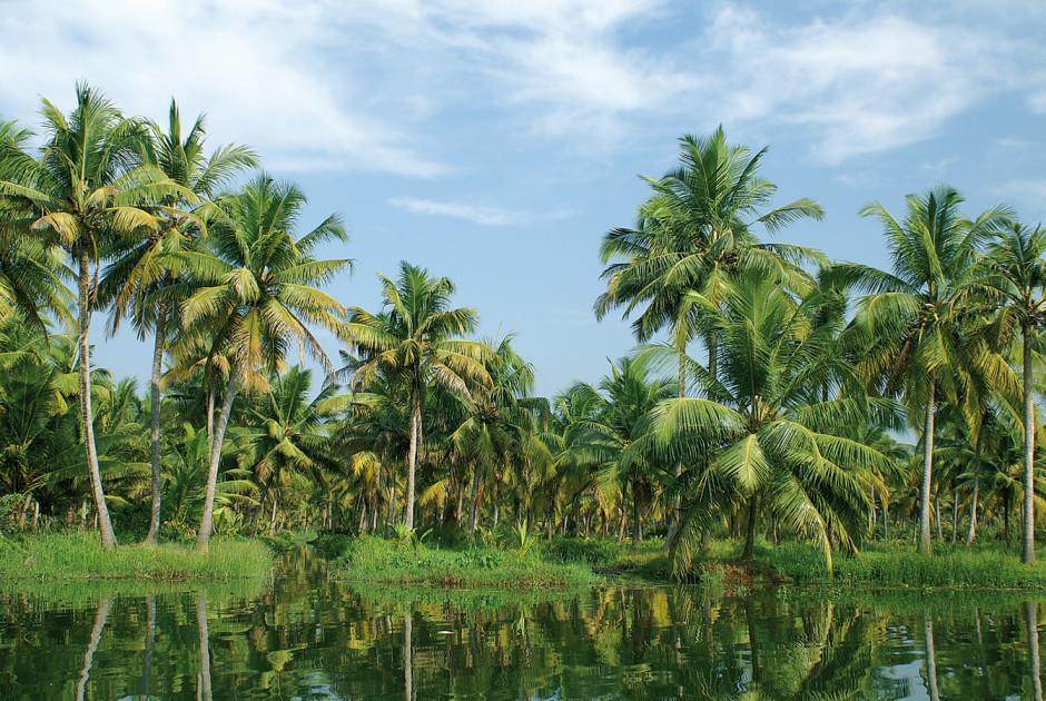 Indien rundreise klassisches s dindien ab chennai bis kochi for Klassisches hausboot